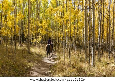 A horseback rider winds through a colorful Aspen grove in Autumn color in the Kenosha Pass. - stock photo