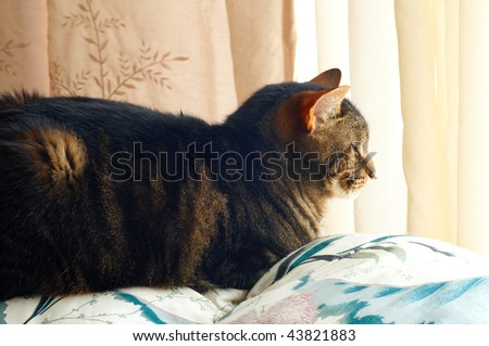 A house cat asleep on top of a sofa in soft window light - stock photo