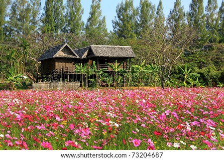 a house in flower field - stock photo