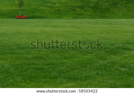 a huge green lawn with a red bench in the distance