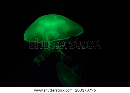 A jellyfish glowing in green light - stock photo