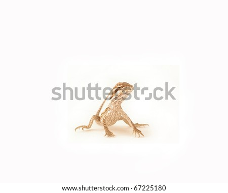 A juvenile bearded dragon isolated on a white background - stock photo