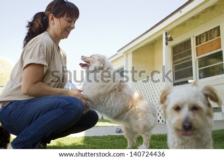 A kennel worker plays with several small dogs. - stock photo