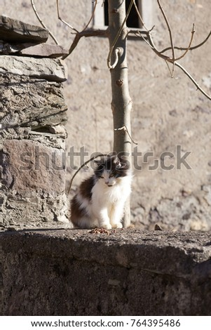a kitten on a wall