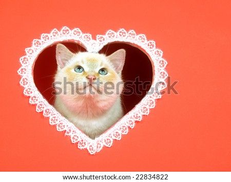 A kitten peeks out of a heart shaped hole cut into a red background for use as valentines day art