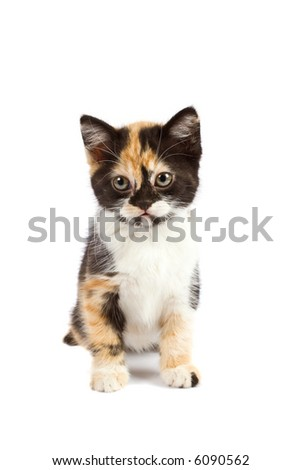 A kitten sits on white background - stock photo