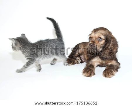 "A kitten walking away from a puppy and the has a look of ""what did I do?"" on his face."