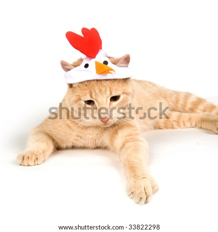 A kitten with a chicken hat sitting on a white background