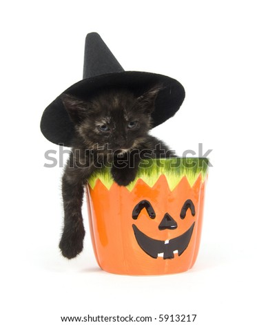 A kitten with a witch hat on its head sits inside of a pumpkin jar on a white background - stock photo