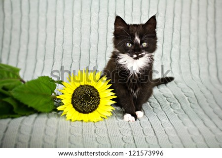 A kitten with  sunflower on grey plaid - stock photo