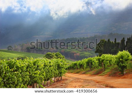 A landscape image of a beautiful vineyard with a dramatic sky. A rural scene from the Cape Town wine area - stock photo