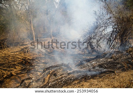 A landscape on brushfire: flame, smoke, ash, trees and sky. - stock photo