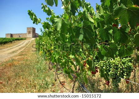 A landscape with grapevines and an old castle. - stock photo