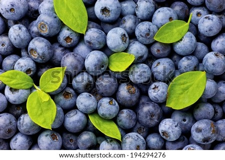 A large amount of blueberries with bright green leaves among them. - stock photo