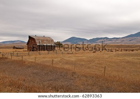 a large barn in a field on a ranch in Montana.  Mountains and cattle are shown as a backdrop to the barn. This scene shows the vast landscape of Montana