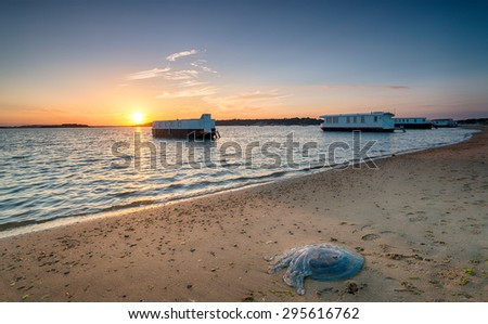 A large barrel jellyfish washed up on the beach at Bramble Bush Bay on Studland in Poole Harbour, Dorset - stock photo