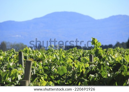 A large blueberry crop with a mountain range and shallow depth of field in Washington State/Washington Fruit Crop and Mountain Range/A berry crop with mountains and shallow DOF in Washington State - stock photo