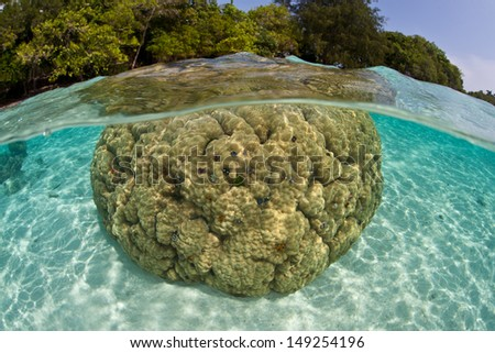 A large boulder coral (Porites sp.), riddled with Christmas tree worms, grows in the Solomon Islands.  This area is found within the Coral Triangle and is high biological diversity. - stock photo