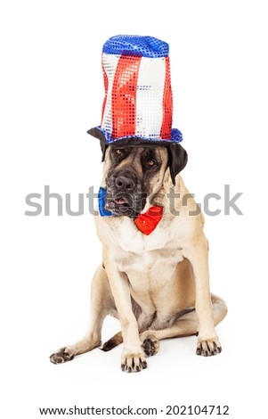 A large breed English Mastiff dog wearing a red, white and blue tall sequin hat and bow tie to celebrate the Fourth of July holiday