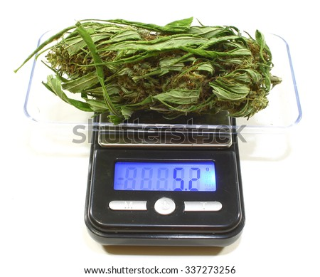 A large female marijuana bud being weighed on a digital scale - stock photo