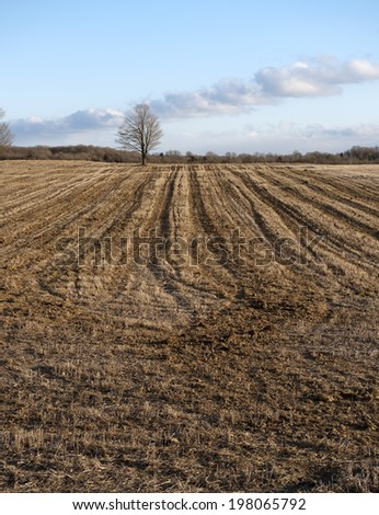 A large field that has been cut down.