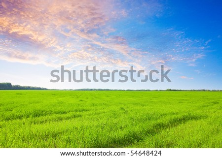 A large green field at dawn - stock photo