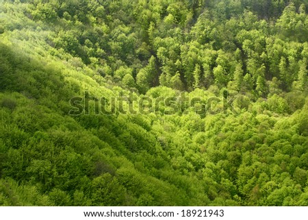 A large green summer forest seen from above - stock photo