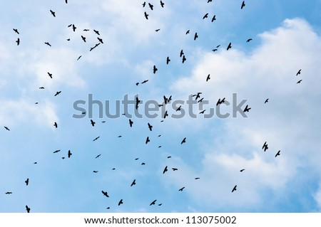 A large group of crows against blue sky - stock photo