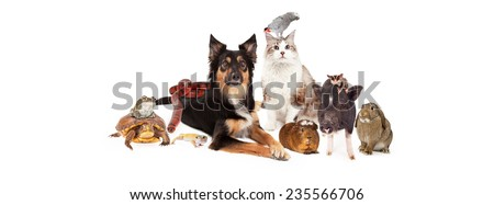 A large group of domestic household pets including a dog, cat, bird, guinea pig, pig, sugar glider, bunny, lizard, snake, turtle and frog. Sized to fit a social media timeline cover placeholder.  - stock photo