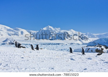 a large group of penguins having fun in the snowy hills of  Antarctica - stock photo