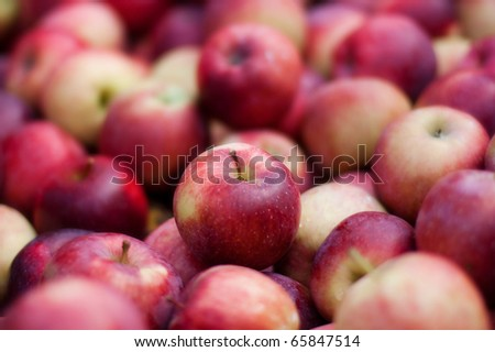 a large group of red delicious apples - stock photo