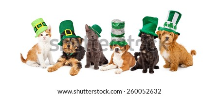 A large group of young kittens and puppies together wearing green St. Patrick's Day hats - stock photo