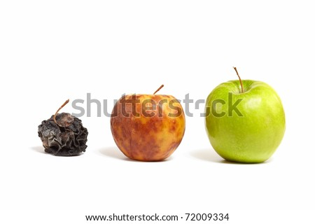 A large juicy green apple next to a small yellow rotting apple next to the little dead withered apple