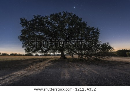 A large moonlit oak tree with Jupiter rising.