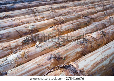 A large pile of logs stacked - stock photo
