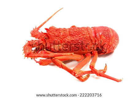 A large red lobster over white background - stock photo