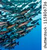 A large school of fish in clear deep water - stock photo