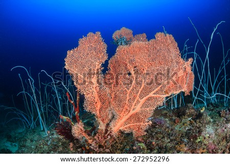A large sea fan and whip corals on a deep coral reef - stock photo