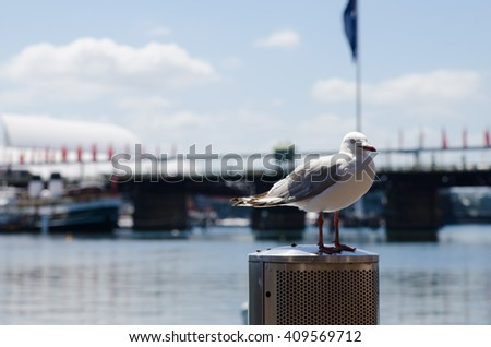 A large sea gull perched on a pillar in sunny Sydney Harbor - stock photo