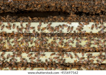 A large swarm of honey bees protect their beehive and bring pollen back to make beeswax and honey. - stock photo