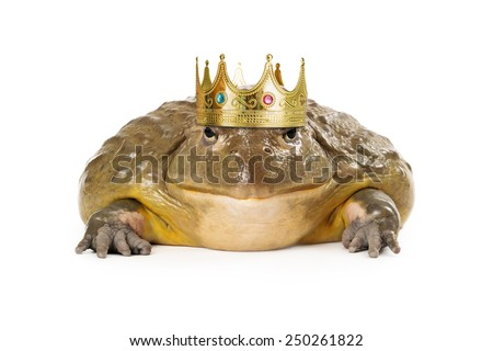 A large toad wearing a prince crown - stock photo