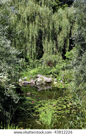 A large weeping willow bordering an ornamental lily pond. - stock photo