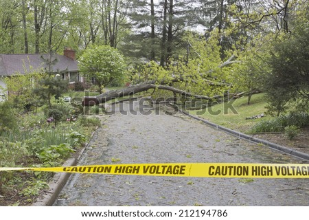 A large, wet oak tree and electrical wires torn down by a Spring storm lie across a neighborhood street blocking passage behind yellow police caution tape warning of high voltage  - stock photo