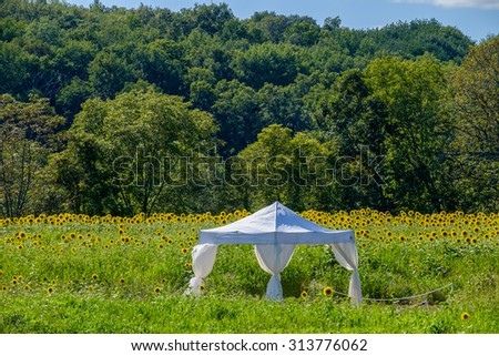 A large white party tent sits in a large field surrounded by vibrant fresh sunflowers - stock photo
