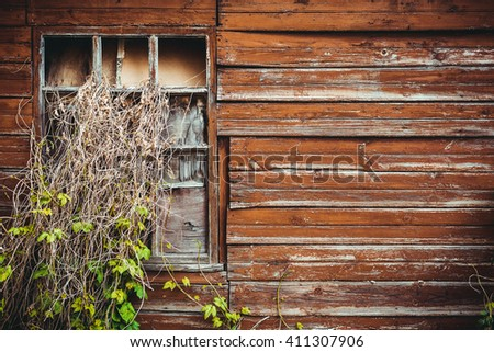 A large window in the abandoned old building growing out of it wild grapes - stock photo