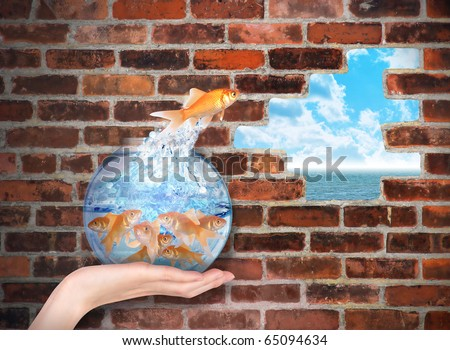 A leader Goldfish is jumping for opportunity through a hole in a brick wall. There are other fish in the crowded fishbowl. Use it for a freedom or business metaphor about growing. - stock photo