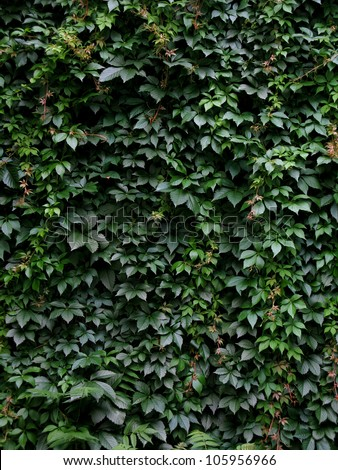 A leaf-covered wall - stock photo
