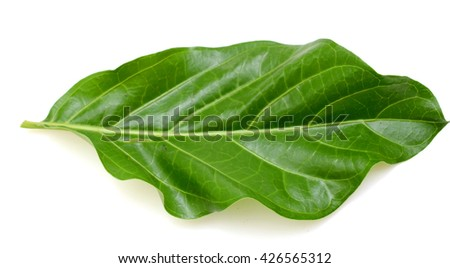 A leaf of Noni isolated on white background