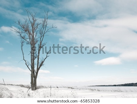 A leafless tree braves the cold air in the middle of a very snowy winter landscape. - stock photo