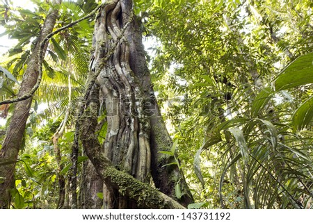 A liana tangled tree trunk in the rainforest, Ecuador - stock photo